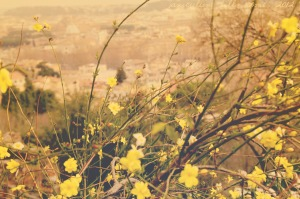 flowersspring